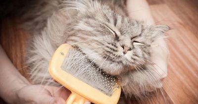 5 советов, как улучшить шерсть кота