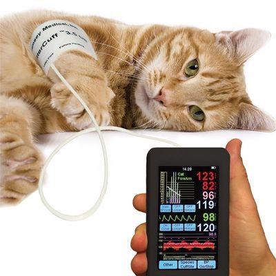 Опасность системной артериальной гипертензии у собак и кошек