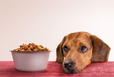 Как правильно выбрать корм для кошек и собак?