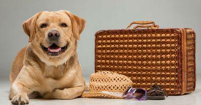 Как провезти свою собаку в страны ЕС?