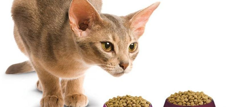 Кот резко похудел и ничего не ест