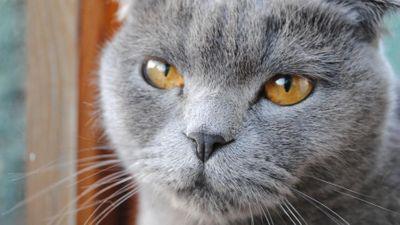Ринотрахеит у кошек: симптомы, диагностика, лечение