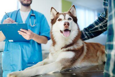 Перелом позвоночника у животных: причины, диагностика и лечение