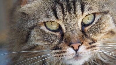Что для человека еда, для кошки – смерть