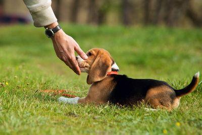 Распространенные ошибки при дрессировке собак