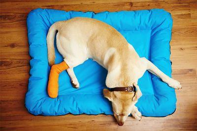 Переломы у собак и их лечение