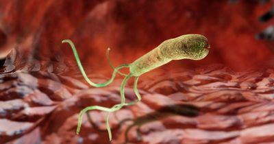 Хеликобактер пилори и заболевания ЖКТ
